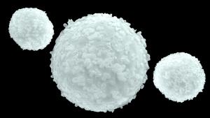globuli bianchi - Stanchezza cronica deriva dai globuli bianchi con poca energia