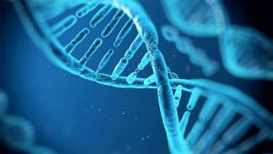 mappa DNA - Bimbo su misura e come piace a noi, accelerazione dagli USA