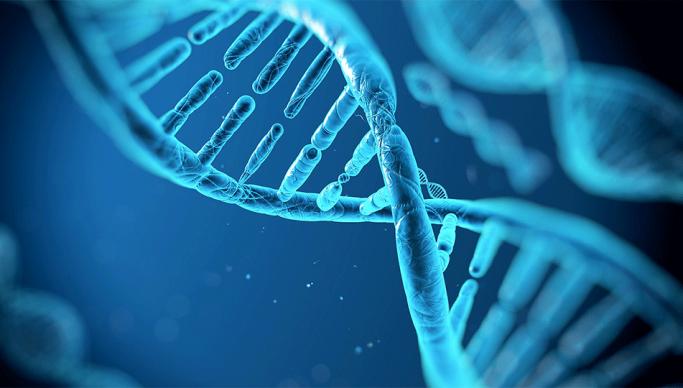 mappa DNA